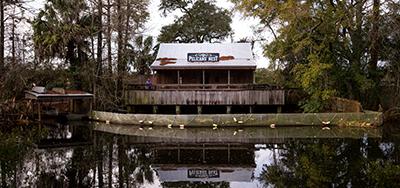 Audubon Swamp Exhibit